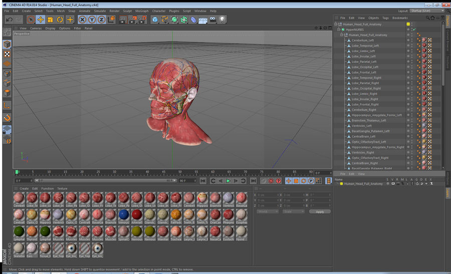 Tête humaine anatomie complète royalty-free 3d model - Preview no. 46