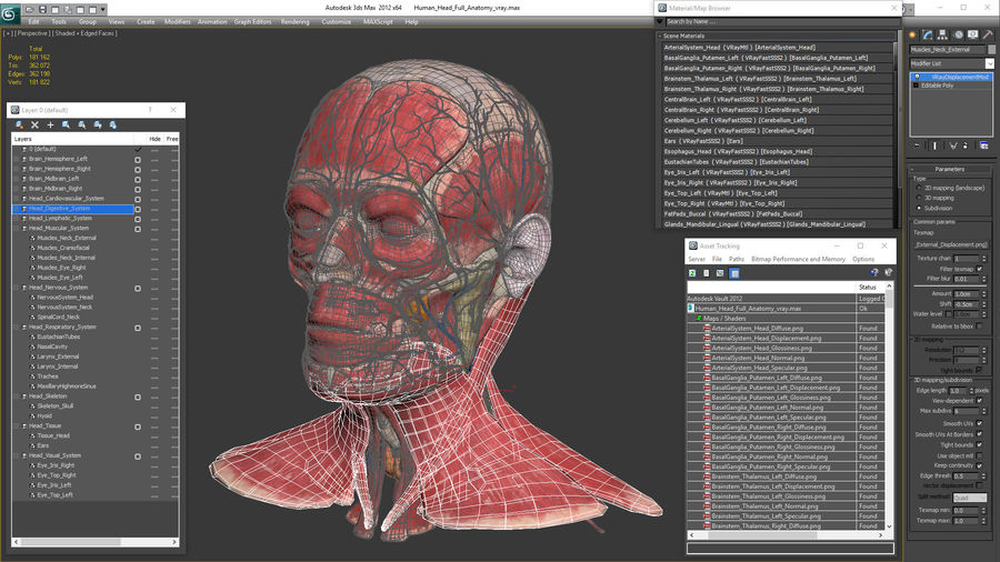 Tête humaine anatomie complète royalty-free 3d model - Preview no. 47