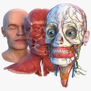 인간의 머리 전체 해부학 및 피부 3d model