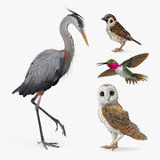 Birds Collection 3d model