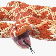 Serpent albinos gréé 3d model