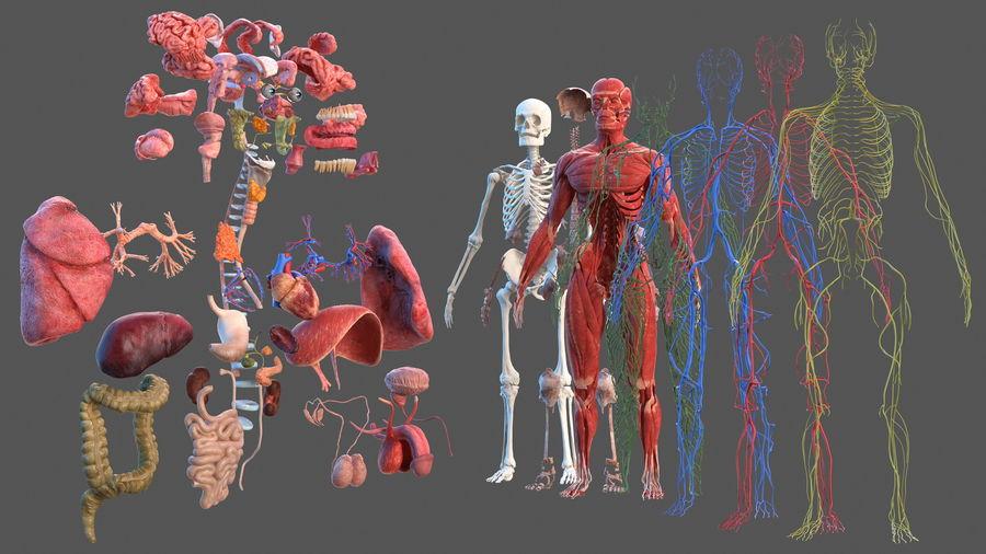 Анатомия мужского тела royalty-free 3d model - Preview no. 2