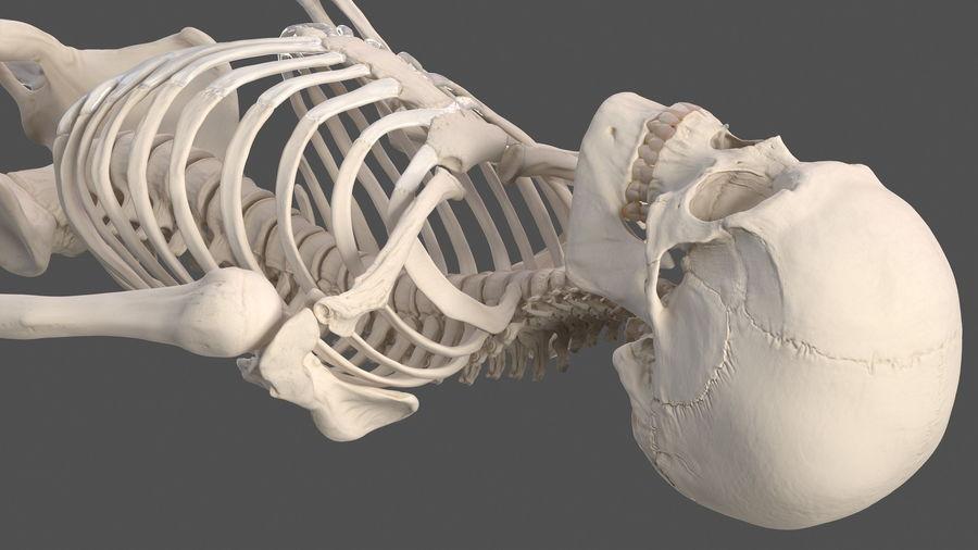 Анатомия мужского тела royalty-free 3d model - Preview no. 73