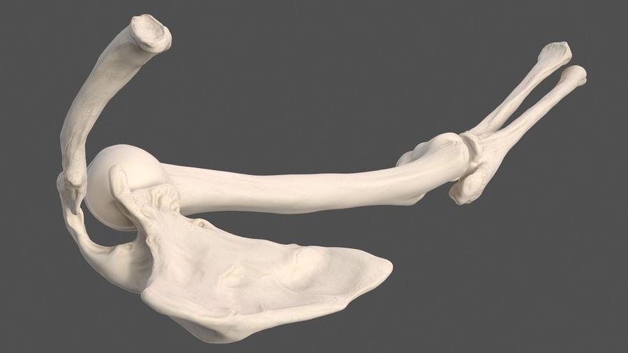 Анатомия мужского тела royalty-free 3d model - Preview no. 80