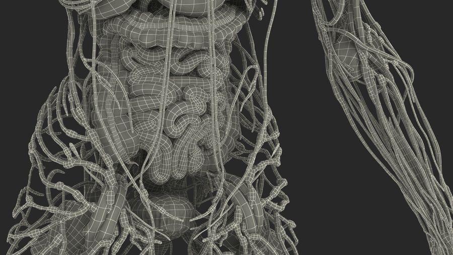 Анатомия мужского тела royalty-free 3d model - Preview no. 96