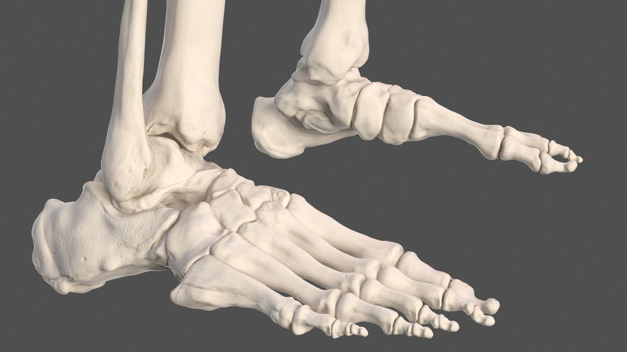 Анатомия мужского тела royalty-free 3d model - Preview no. 78