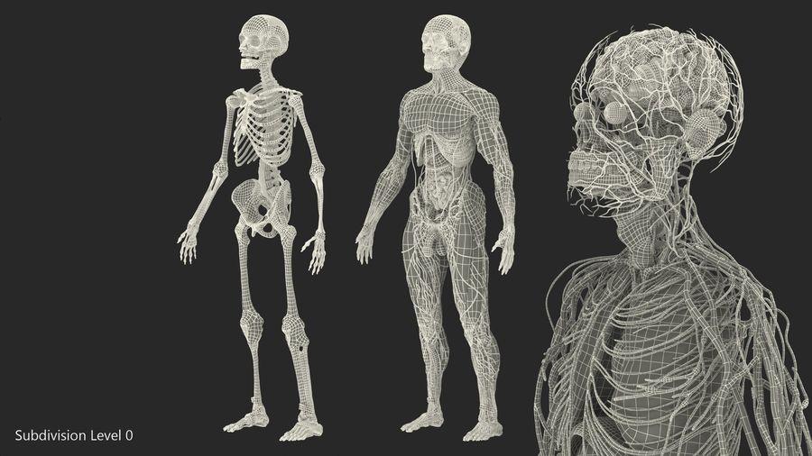 Анатомия мужского тела royalty-free 3d model - Preview no. 85