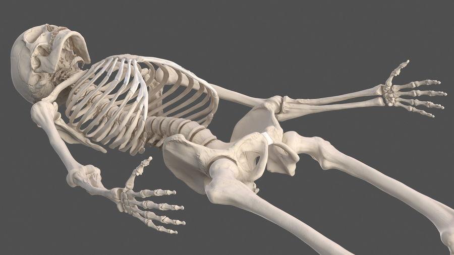 Анатомия мужского тела royalty-free 3d model - Preview no. 72