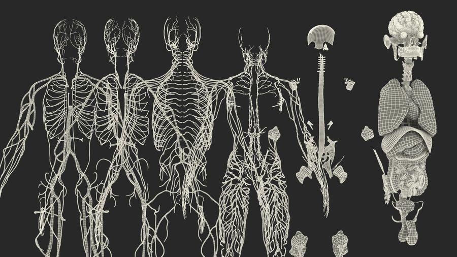 Анатомия мужского тела royalty-free 3d model - Preview no. 93