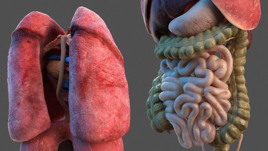 Анатомия мужского тела royalty-free 3d model - Preview no. 46