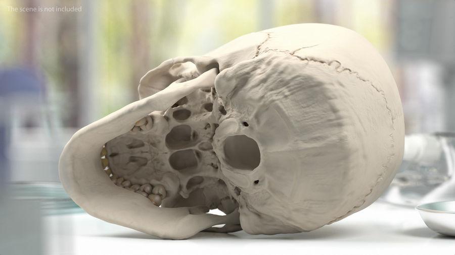 Анатомия мужского тела royalty-free 3d model - Preview no. 66