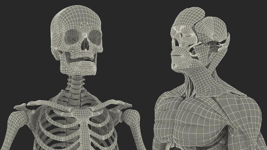 Анатомия мужского тела royalty-free 3d model - Preview no. 94