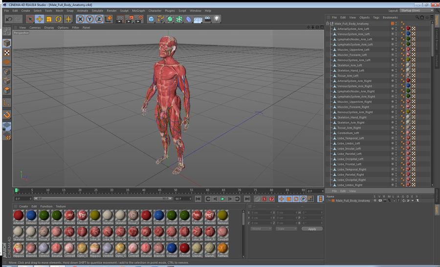 Анатомия мужского тела royalty-free 3d model - Preview no. 90