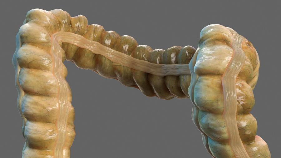 Анатомия мужского тела royalty-free 3d model - Preview no. 55