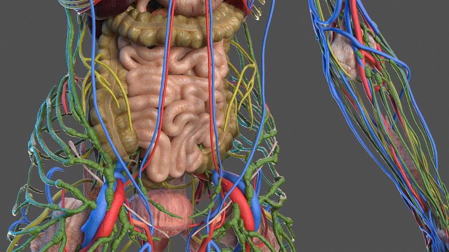 Анатомия мужского тела royalty-free 3d model - Preview no. 20