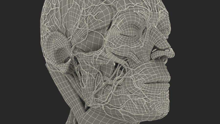 Анатомия мужского тела royalty-free 3d model - Preview no. 95