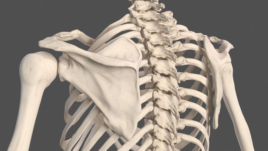 Анатомия мужского тела royalty-free 3d model - Preview no. 74
