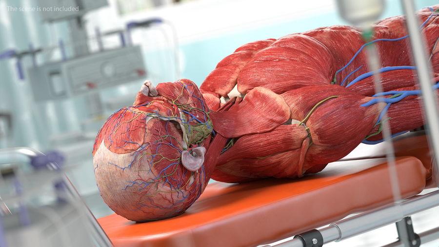 Анатомия мужского тела royalty-free 3d model - Preview no. 38