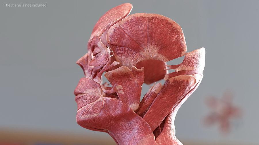 Анатомия мужского тела royalty-free 3d model - Preview no. 29