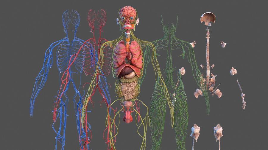Анатомия мужского тела royalty-free 3d model - Preview no. 21