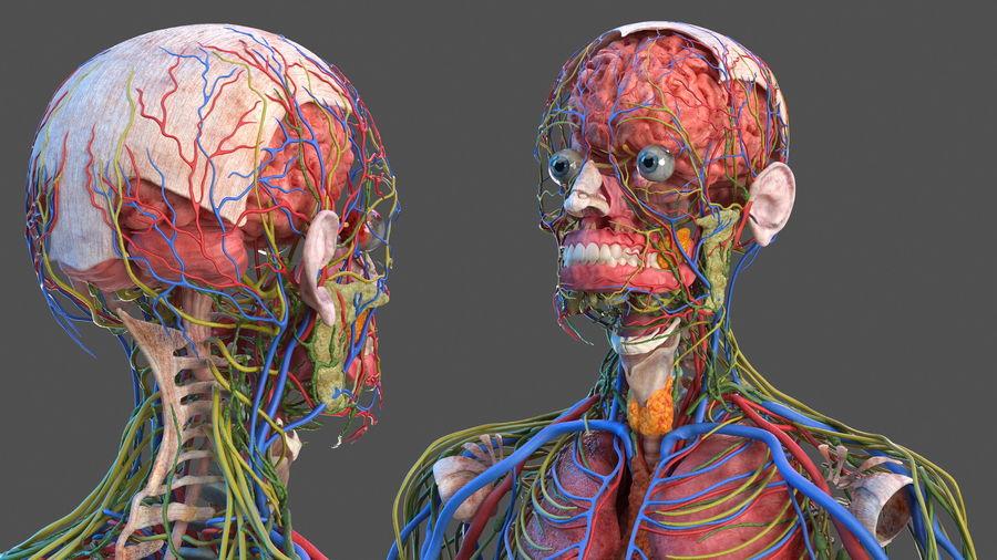 Анатомия мужского тела royalty-free 3d model - Preview no. 18