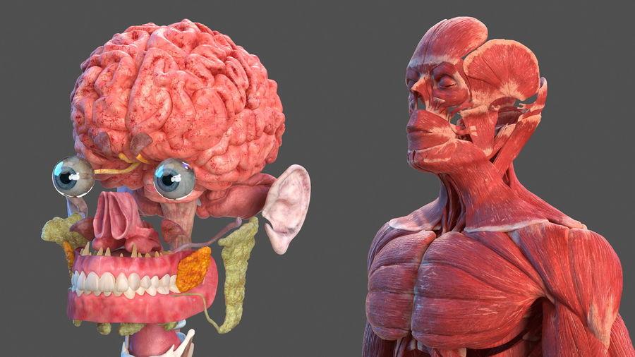 Анатомия мужского тела royalty-free 3d model - Preview no. 17