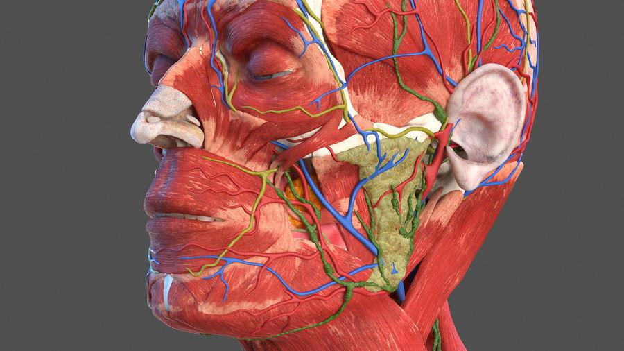 Анатомия мужского тела royalty-free 3d model - Preview no. 16