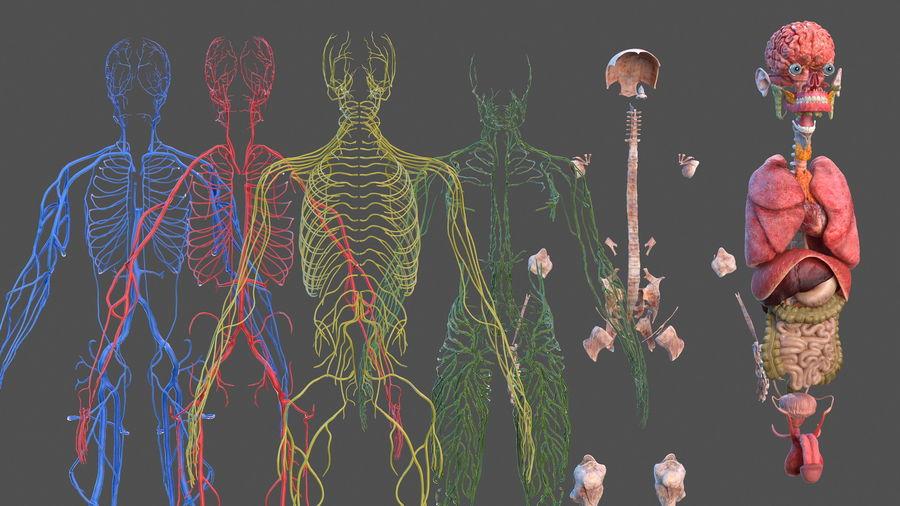Анатомия мужского тела royalty-free 3d model - Preview no. 6