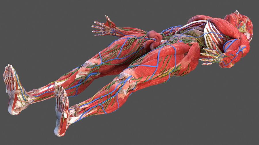 Анатомия мужского тела royalty-free 3d model - Preview no. 83