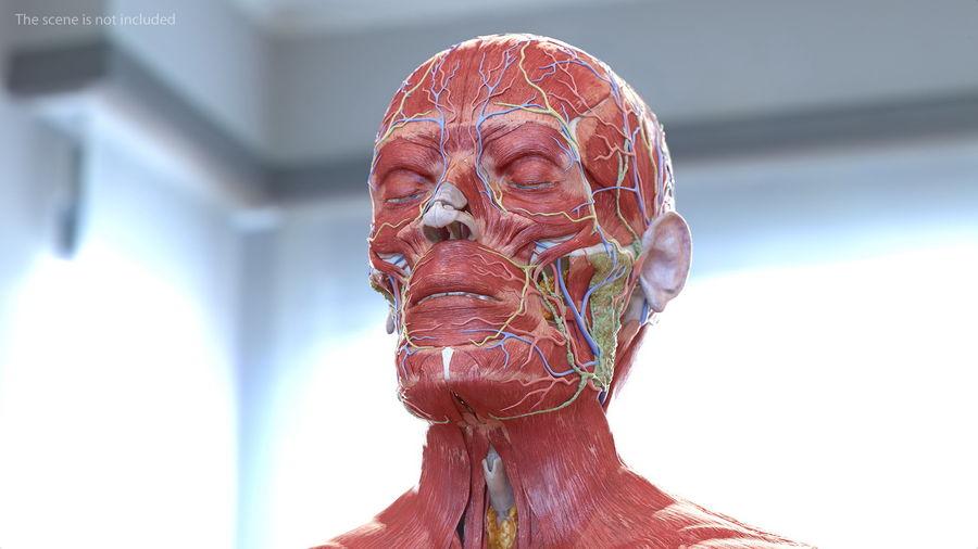 Анатомия мужского тела royalty-free 3d model - Preview no. 37