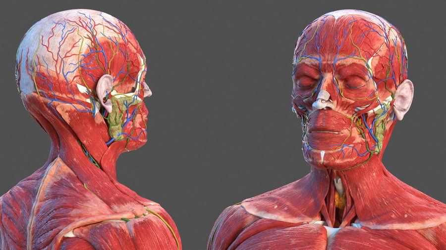 Анатомия мужского тела royalty-free 3d model - Preview no. 11