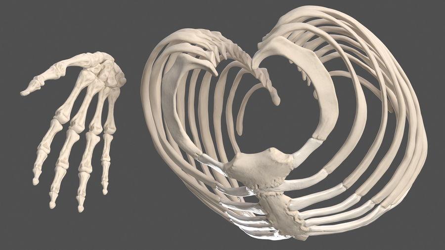 Анатомия мужского тела royalty-free 3d model - Preview no. 77