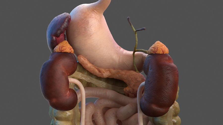 Анатомия мужского тела royalty-free 3d model - Preview no. 51