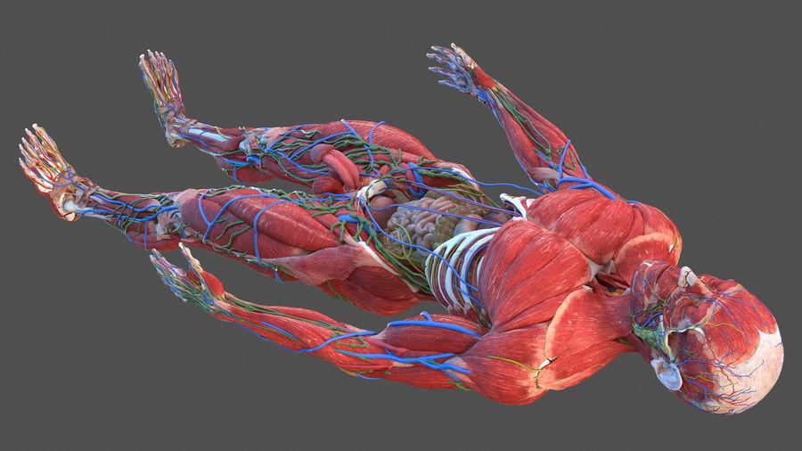 Анатомия мужского тела royalty-free 3d model - Preview no. 82