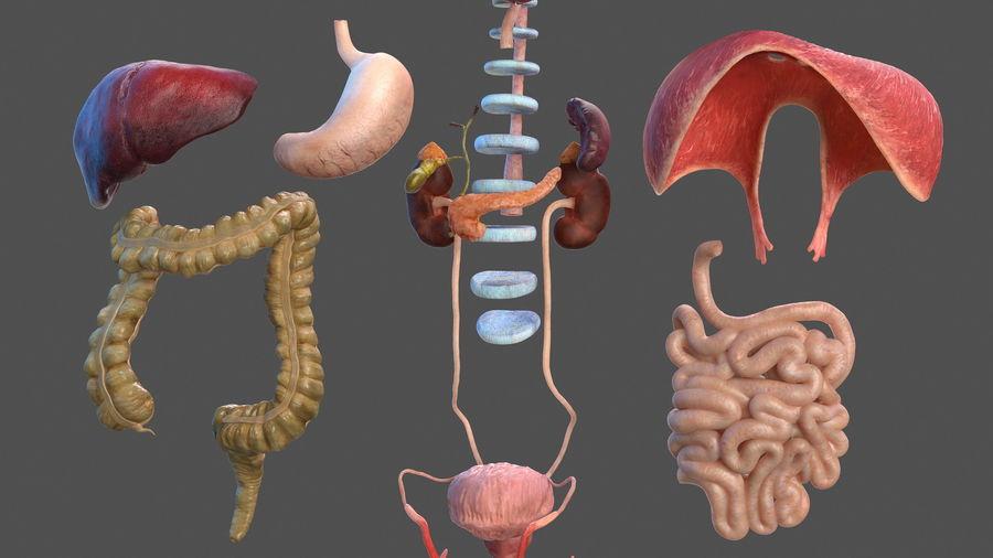 Анатомия мужского тела royalty-free 3d model - Preview no. 47