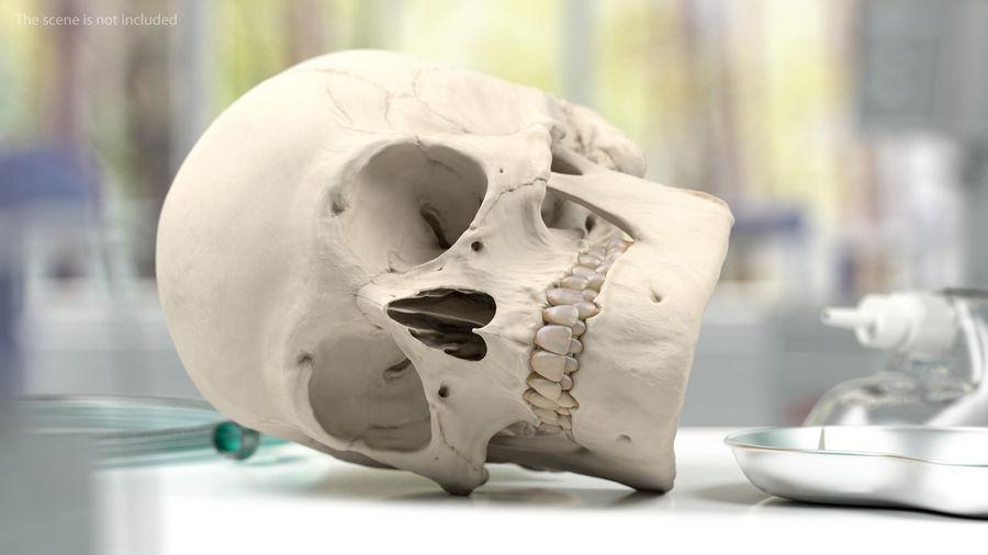 Анатомия мужского тела royalty-free 3d model - Preview no. 65