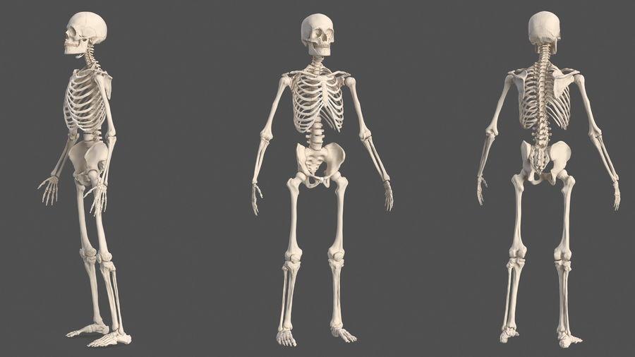 Анатомия мужского тела royalty-free 3d model - Preview no. 69