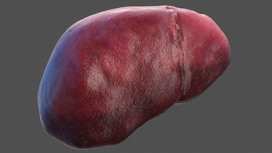 Анатомия мужского тела royalty-free 3d model - Preview no. 56