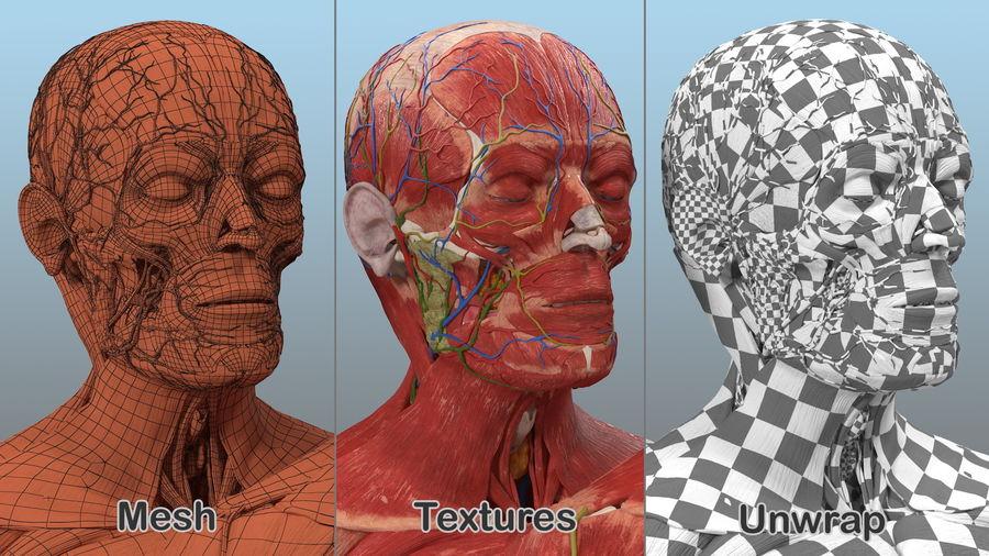 Анатомия мужского тела royalty-free 3d model - Preview no. 84