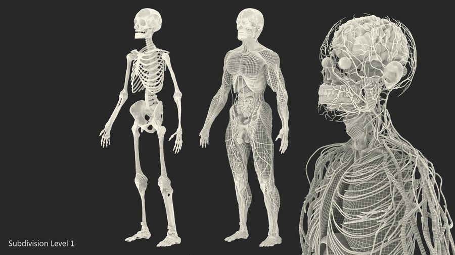 Анатомия мужского тела royalty-free 3d model - Preview no. 86