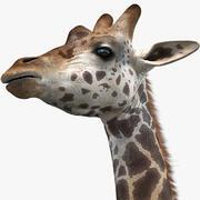 Zürafa (2) 3d model