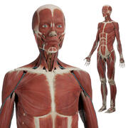 Anatomie féminine PBR 3d model