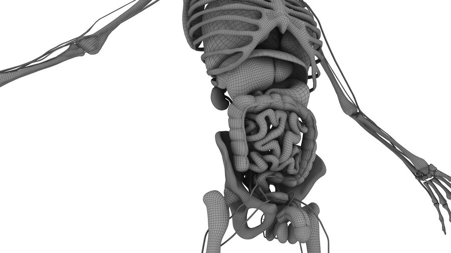 Full Body Anatomy 01 royalty-free 3d model - Preview no. 39