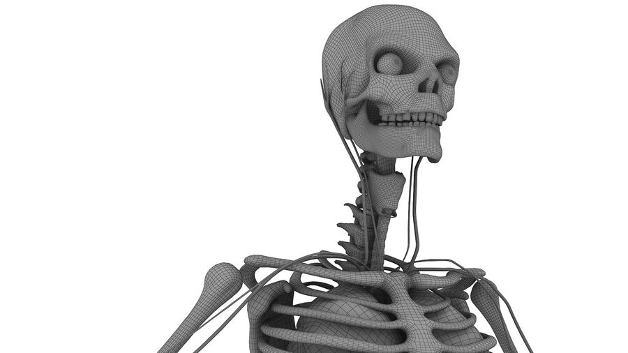 Full Body Anatomy 01 royalty-free 3d model - Preview no. 38