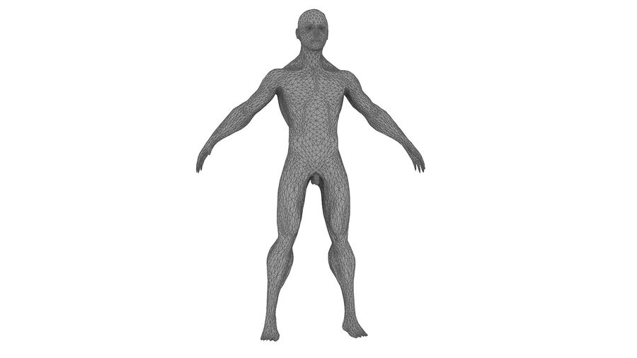 Full Body Anatomy 01 royalty-free 3d model - Preview no. 37