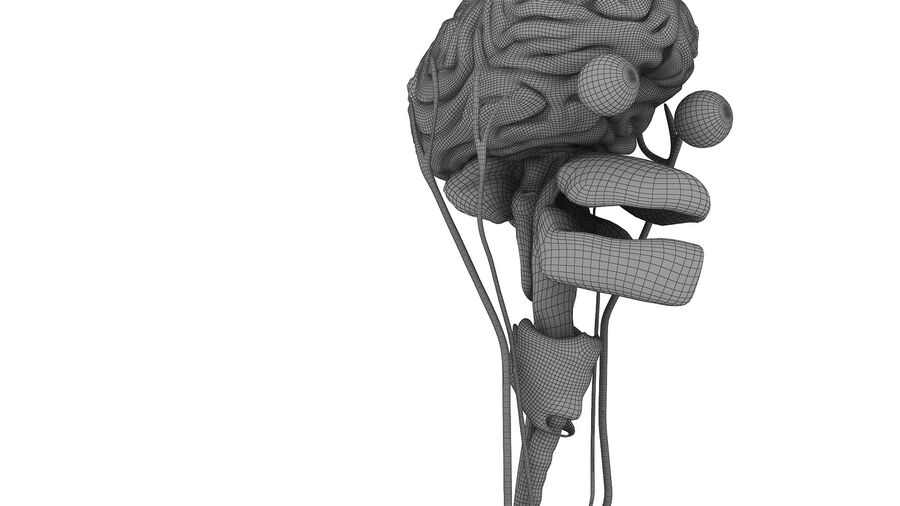 Full Body Anatomy Viscera royalty-free 3d model - Preview no. 61