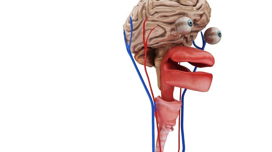 Full Body Anatomy Viscera royalty-free 3d model - Preview no. 14