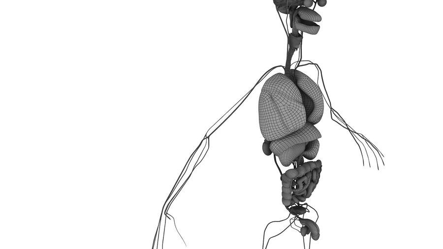 Full Body Anatomy Viscera royalty-free 3d model - Preview no. 57