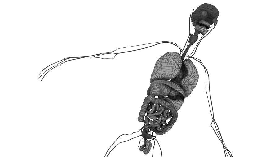 Full Body Anatomy Viscera royalty-free 3d model - Preview no. 50