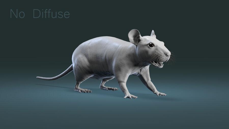Rat sans poils royalty-free 3d model - Preview no. 5